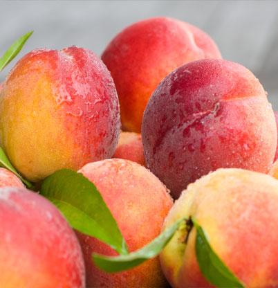Freshest Fruits