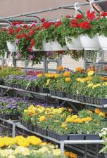 Edwards Flowerland and Floral